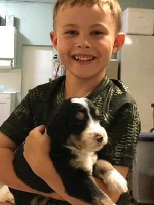 5 year old Fisher holding a Bernedoodle puppy