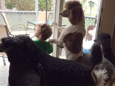 Dogs looking out the sliding glass door with their buddy Fisher